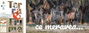 Cervignano CE Meravea - Contest fotografico @ Stone Gallery