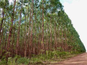 Deserto verde : la monocoltura dell'eucalipto in Brasile. @ Circolo Ricreativo e Culturale Nuovi Orizzonti